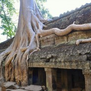 Picture of the Day: Nature Reclaiming Its Own at Angkor