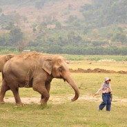 Close Encounters of the Elephant Kind