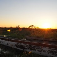 Elephant Spotting in the Okavango Delta