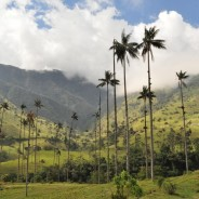 Photos: Hiking Around Valle De Cocora