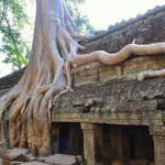 Tree taking over temple at Angkor Wat