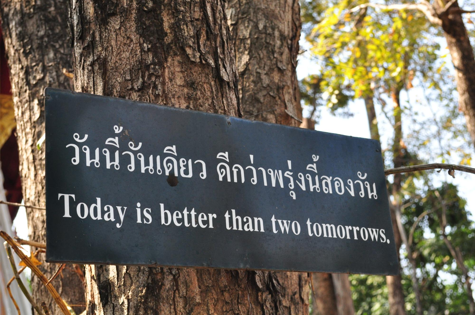 All I Really Need to Know I Learned From a Tree in Chiang Mai