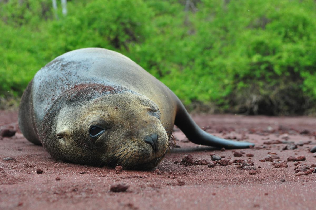 Travel The Galapagos Without Paying Retail